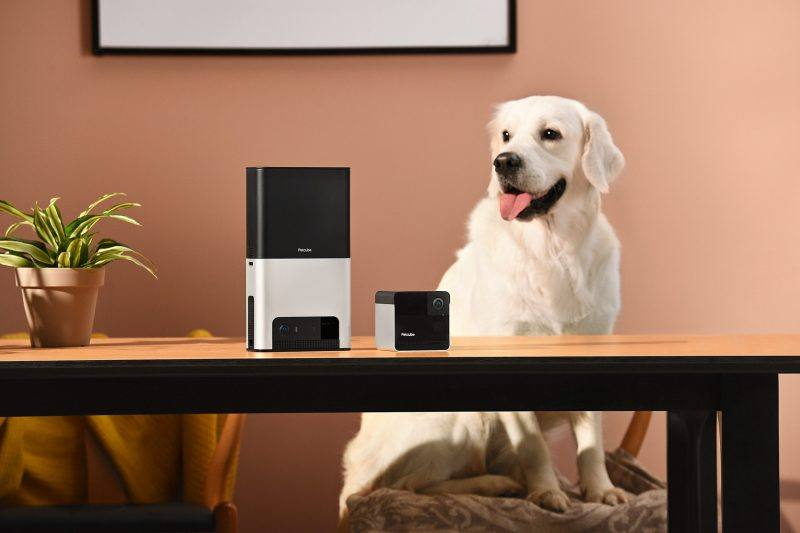 An image showing a dog with two smart pet cameras and treat dispenser.