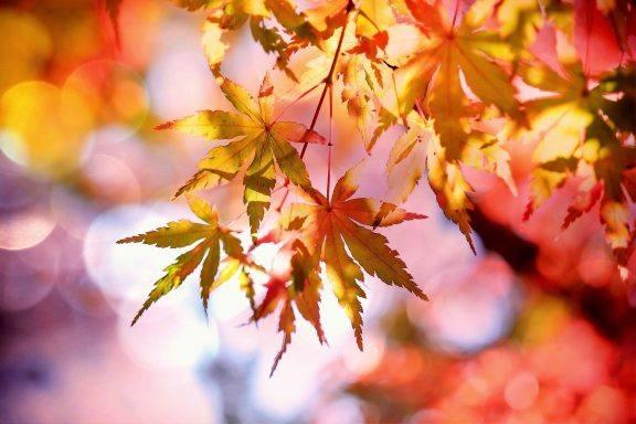 Autumn Tech Giveaway